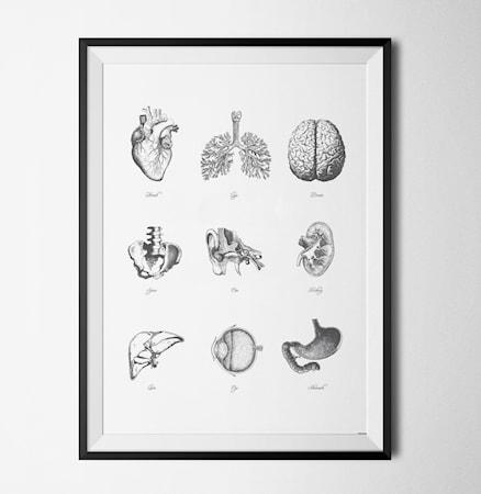 Bilde av Konstgaraget Anatomy poster