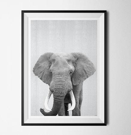 Bilde av Konstgaraget Grey animal elephant poster