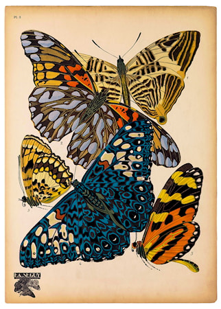 Bilde av Print Collection Butterflies Plate 3 poster
