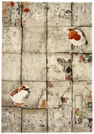 Robin matta