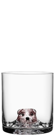 Kosta Boda New Friends Tumbler karhu 40 cl