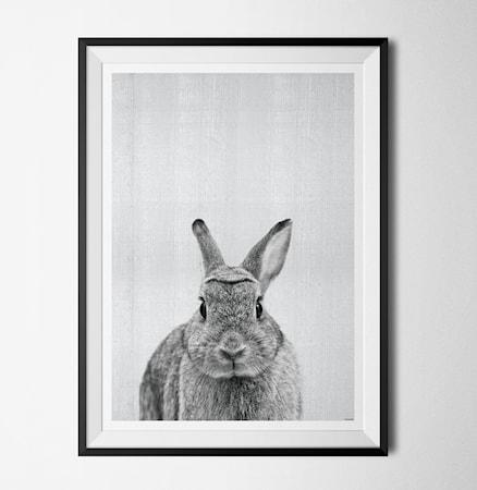 Bilde av Konstgaraget Grey animals Rabbit poster