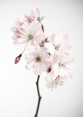 Details by M Ancient blossom no.1 poster – 50x70