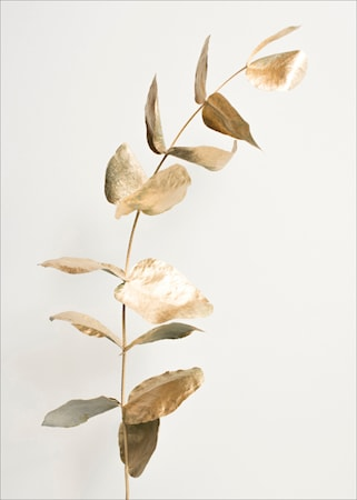 Details by M Harmony in gold poster - 50x70