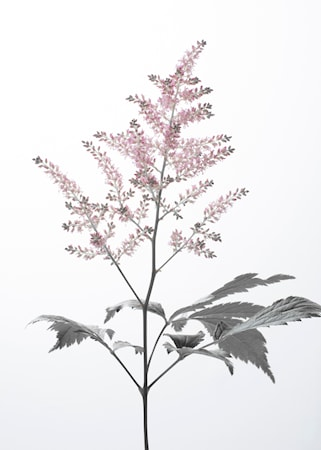 Details by M Astilbe poster – 50x70