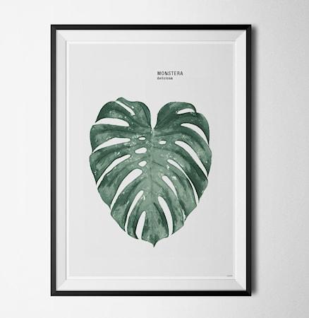 Bilde av Konstgaraget Plant monstera poster
