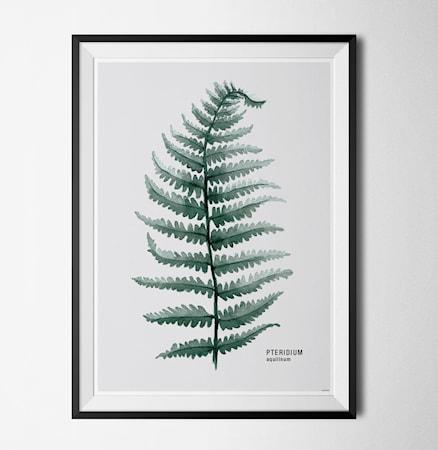 Bilde av Konstgaraget Plant pteridum poster