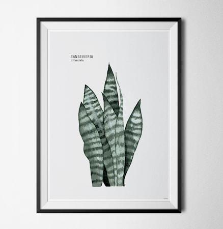 Bilde av Konstgaraget Plant sansevieria poster