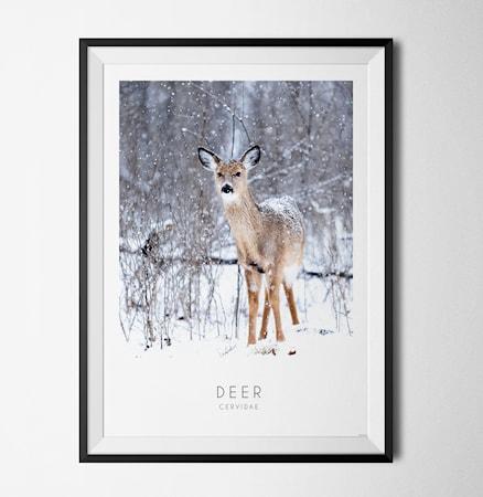 Bilde av Konstgaraget Photo art Deer poster