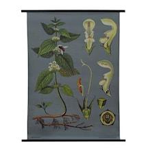 Canvasposter 85x120 – Nässla