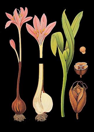 Bild av Ritz Deco Canvasposter 85x120 – Tidlösa