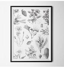 Illustrated garden poster