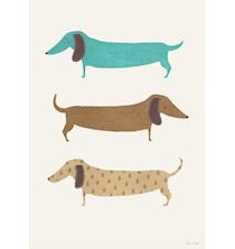 Sausage dogs A3