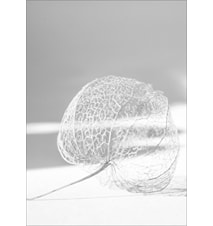 Nest poster - 50x70