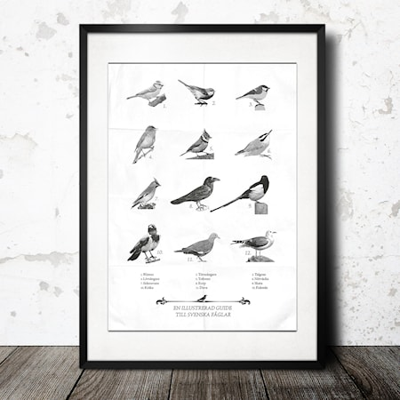 guide to swedish birds poster
