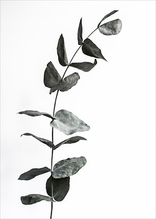 Harmony in black poster - 50x70