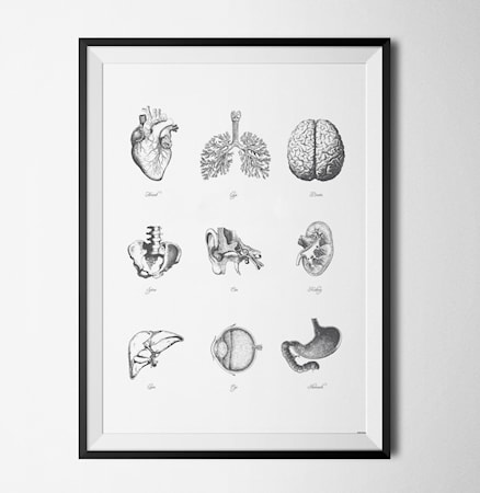 Anatomy poster