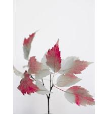 Autumn glint poster – 50x70