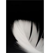 Lightness poster - 50x70