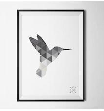 Hummingbird grey poster