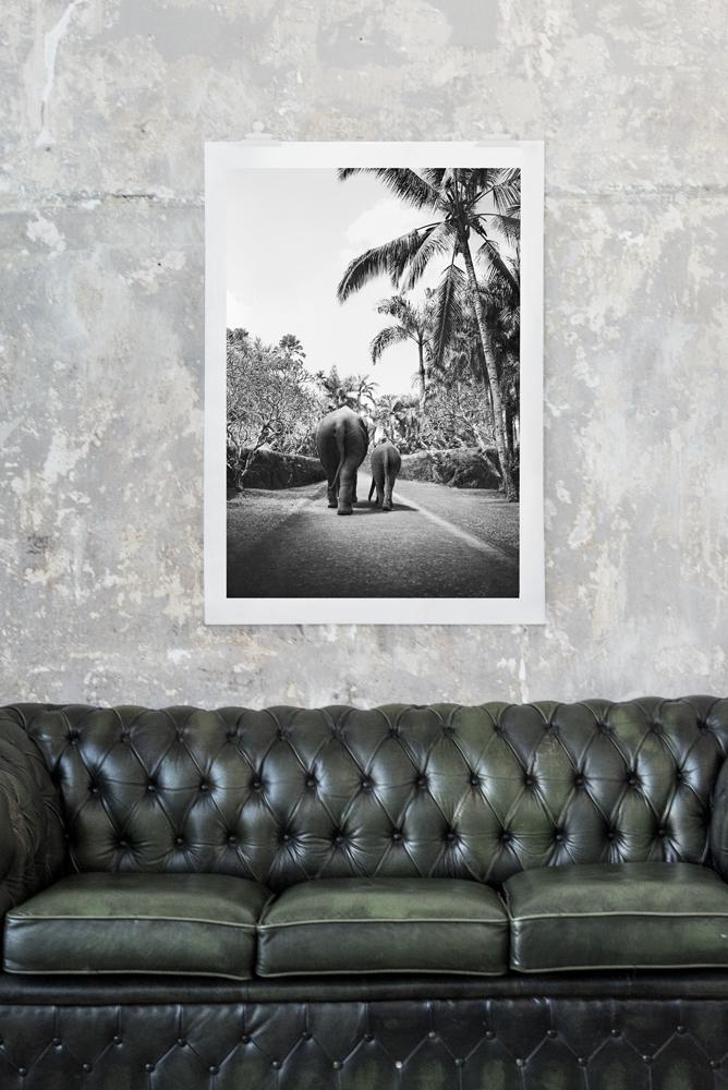 Elefaphant walk fotoprint - 50x70