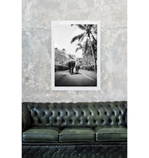 Elefaphant walk fotoprint - 50x70