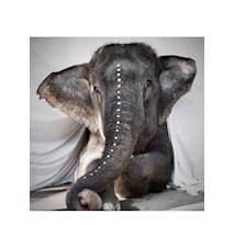 Elefaphant Adele fotoprint -100x100