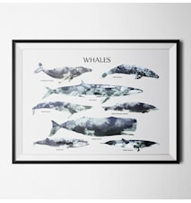 Whales poster - 40x60