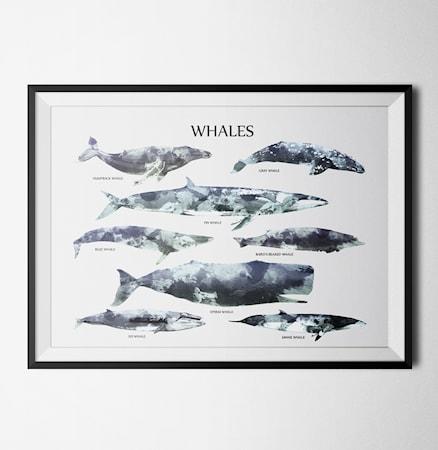 Bild av Konstgaraget Whales poster