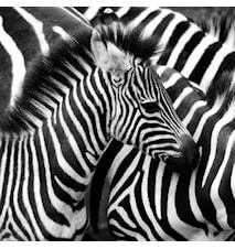 Zebra väggdekoration