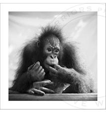 Baby Fajar fotoprint - 50x50