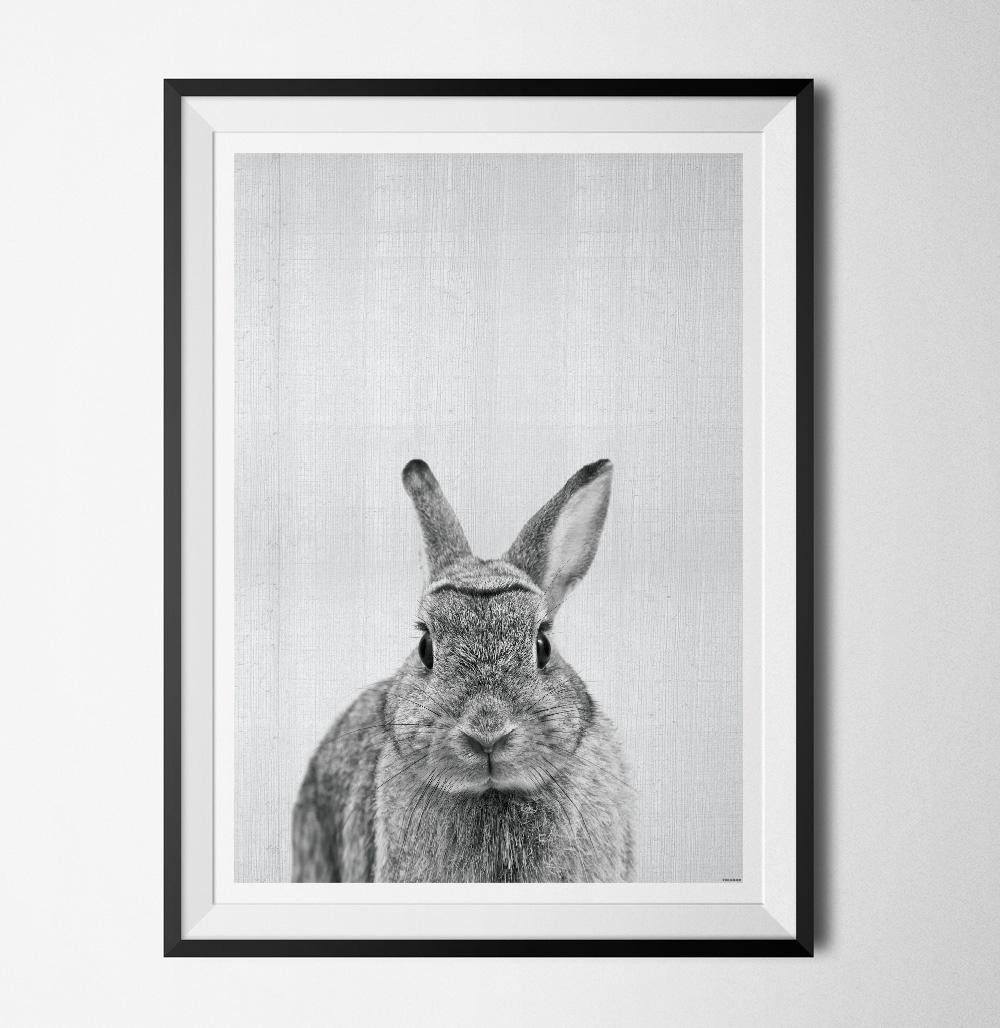 Grey animals Rabbit poster