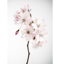 Ancient blossom no.1 poster – 50x70