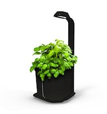 Genie Plantekrukke Svart