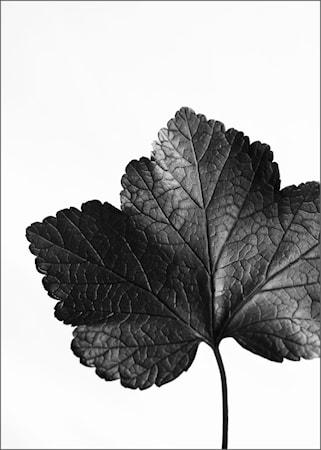 Aciarium poster - 50x70