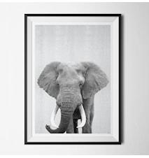 Grey animal elephant poster