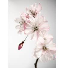 Ancient blossom no.2 poster – 50x70