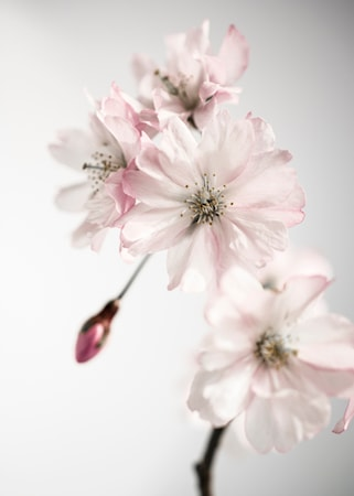 Ancient blossom no.2 poster – 50x70