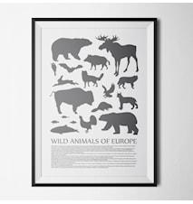 54 Animals poster - 40x60