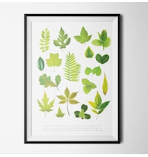 Leaves poster - 40x60