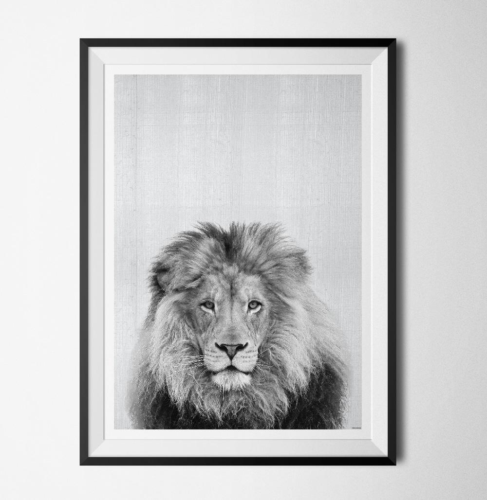 Grey animals lion poster