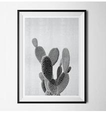 Grey cactus poster