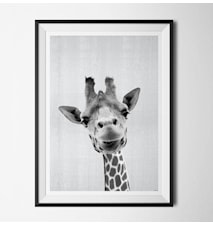 Grey animals jiraffe poster