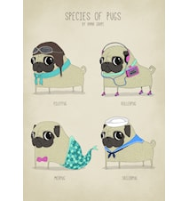Species of pugs A3