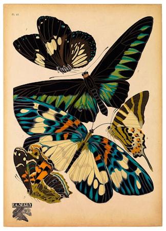 Butterflies Plate 10 poster