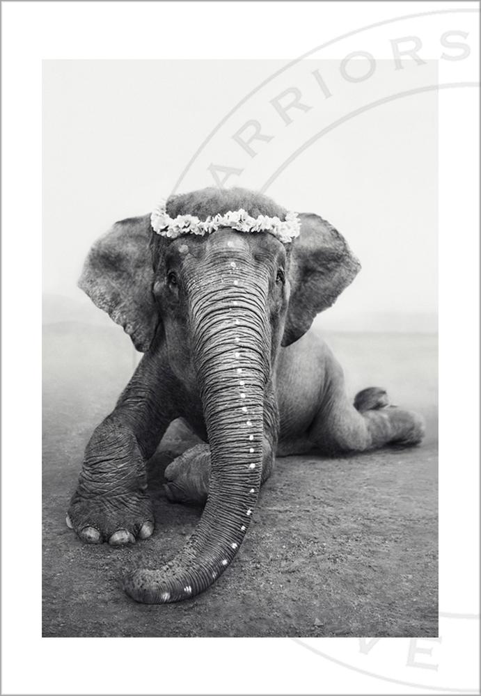 Sweetest Adele fotoprint - 30x40