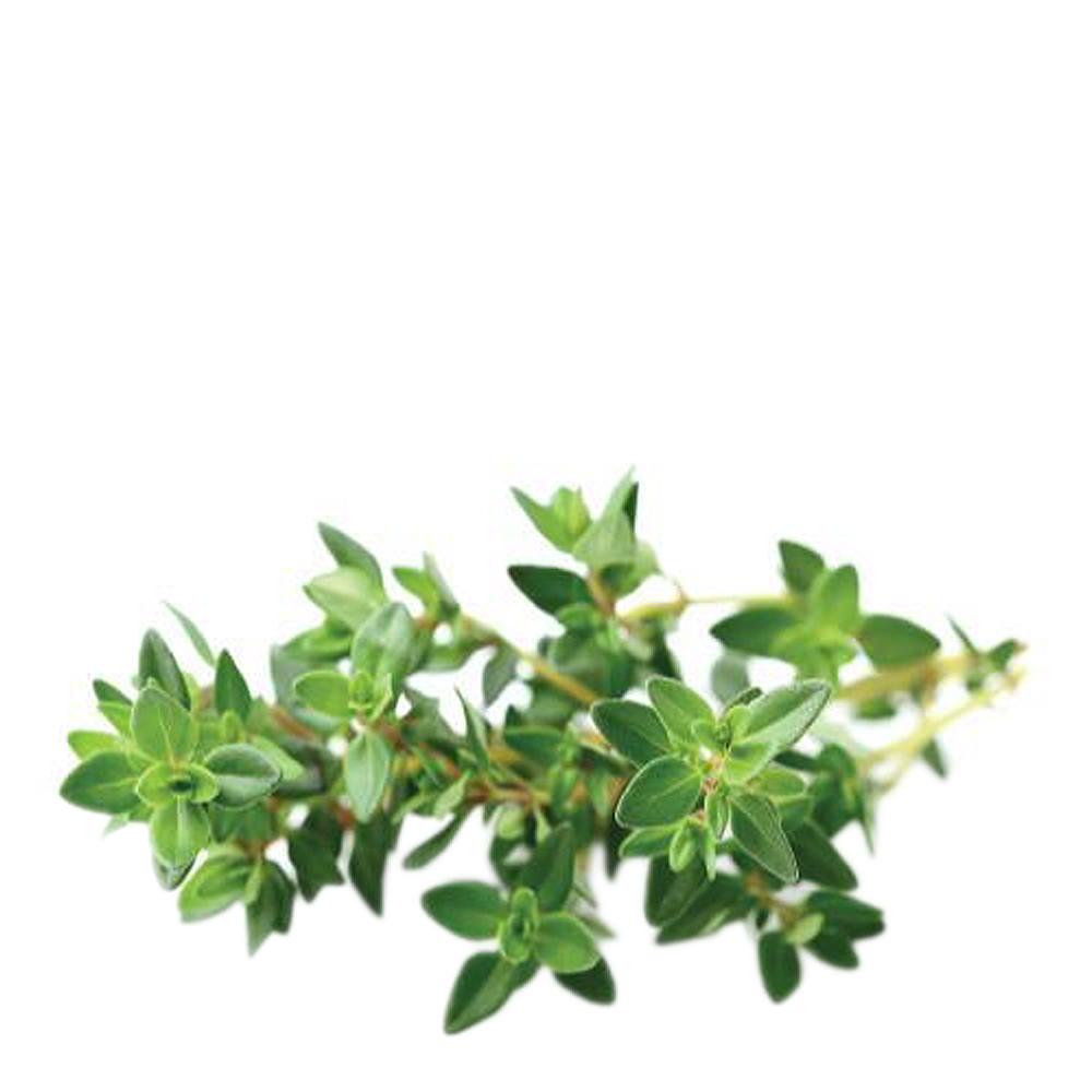 Smart Garden Växtkapsel refill 3-pack Timjan