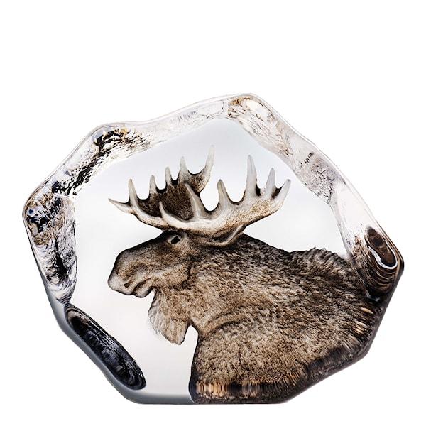 Wildlife Älg 11x9,5 cm