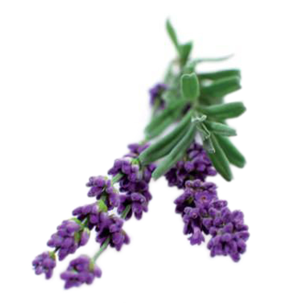 Smart Garden Växtkapsel refill 3-pack Lavendel
