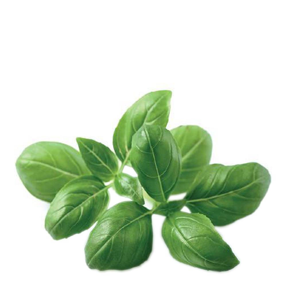 Smart Garden Växtkapsel refill 3-pack Basilika